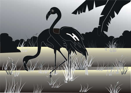 The vector image of silhouettes of two flamingos. photo