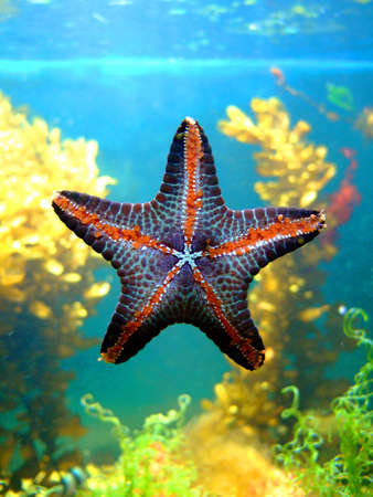 Photo of a beautiful starfish. An illustration for magazines about the nature.