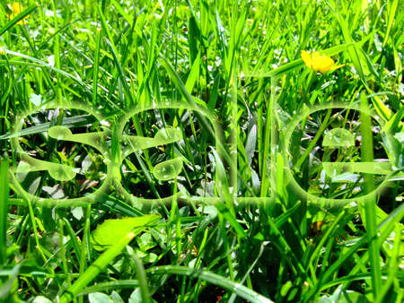 Photo of a beautiful green grass on a meadow with a word  photo