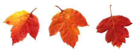 Leaves autumn.