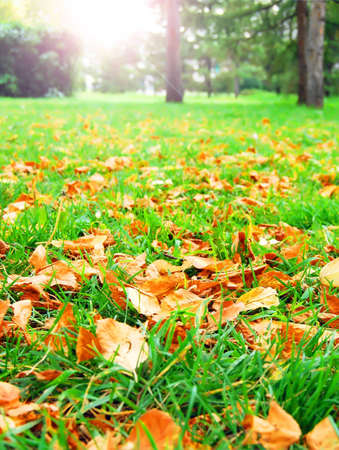Autumn landscape with grass. Stock Photo - 6188631