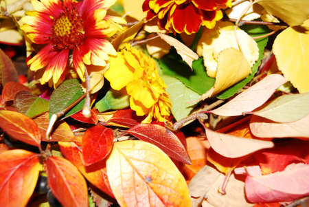 Leaf autumn. photo