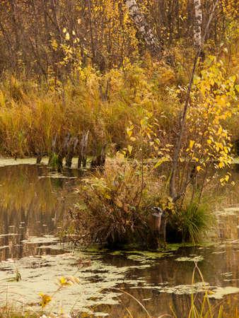 duckweed: swamp Stock Photo