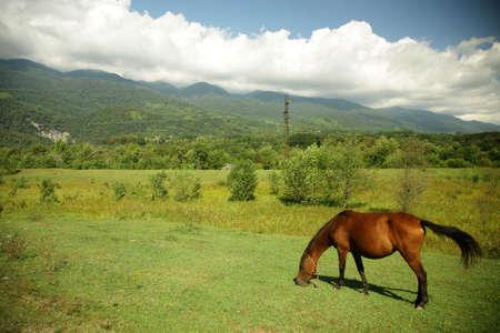 Picturesque summer landscape. Horse on pasture photo