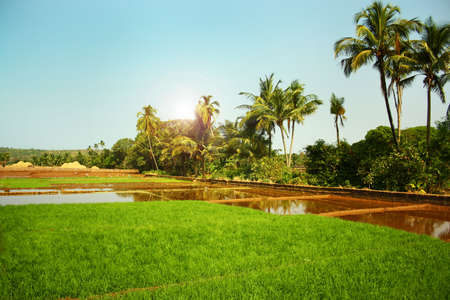 Landscape with flooded rice fields in India photo