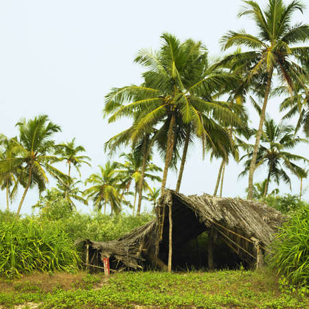dwell: Fishing hut under the palm trees in India