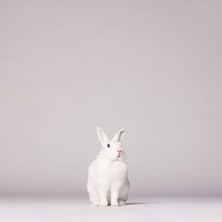 Studio photo of white rabbit on white background Stock Photo