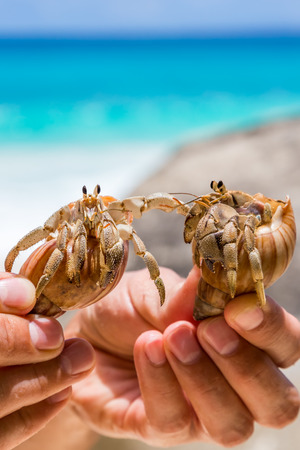 Two beautiful tropical large hermit crab in hand on background of turquoise, blue sea in the Seychelles Stock Photo