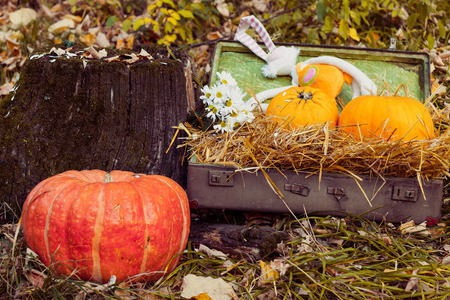 Autumn still life with pumpkins, flowers, retro suitcase, lie in the nature near a large tree stump. Stok Fotoğraf