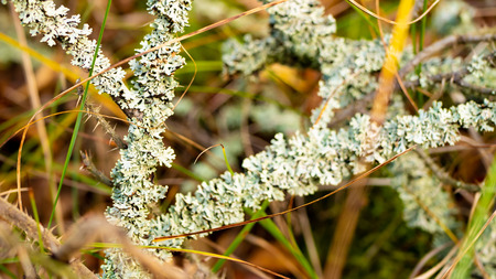 Lichen on a branch. Stock Photo