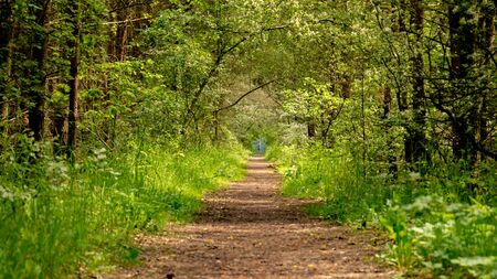 Path in spring green forest. Poland.
