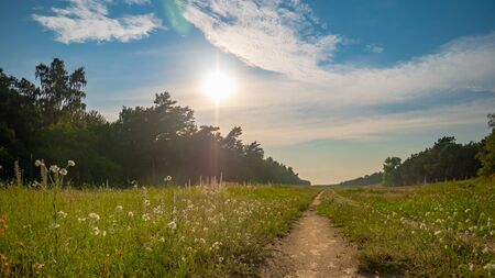 Sunny summer day after the storm. Beautiful meadow with mist. Path in field with wildflowers. Gdansk, Stogi, Poland. Stock Photo
