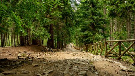 Chemin d'accès à la cascade Kamienczyk dans la forêt de Szklarska Poreba, Pologne.