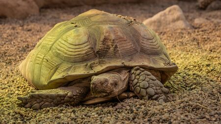 Big turtle in a zoo. Close view