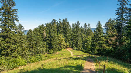Pieniny Poland. Forest hiking trail on a sunny day. Forest Road.