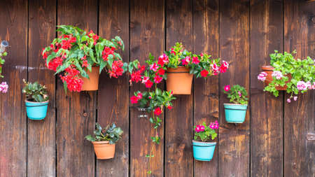Flowers in pots on a wooden wall Фото со стока