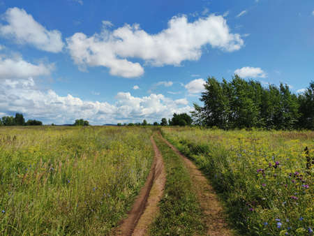 road in a field among green grass and trees on a sunny day Stockfoto