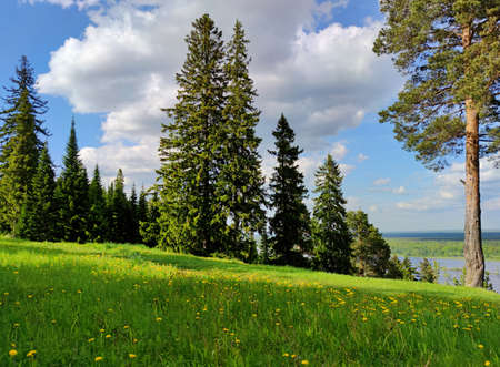 lush green meadow on top of a slope with trees against a blue sky on a sunny day