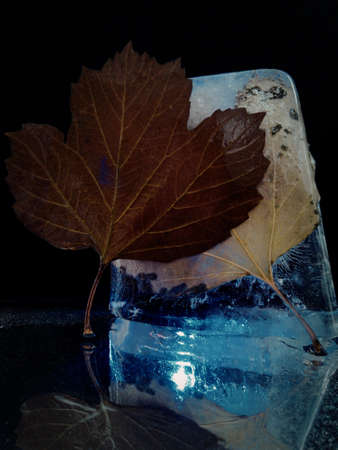 abstract photo with two autumn leaves and ice illuminated in the dark Stock fotó - 155444646