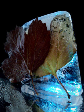 abstract photo with ice and autumn leaves illuminated in the dark Stock fotó - 155444904