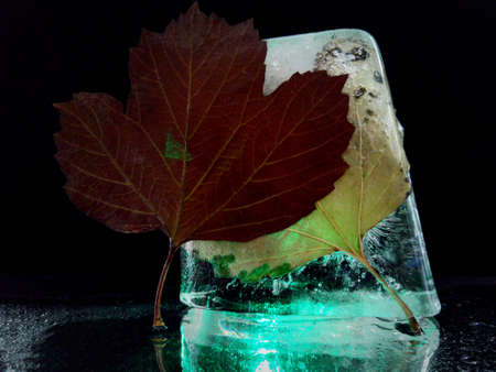 abstract and creative photo with ice and autumn foliage Stock fotó