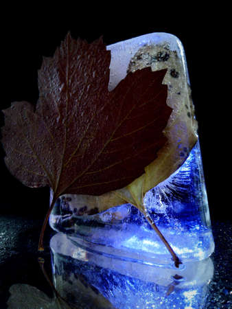 ice and leaves in creative and abstract photography