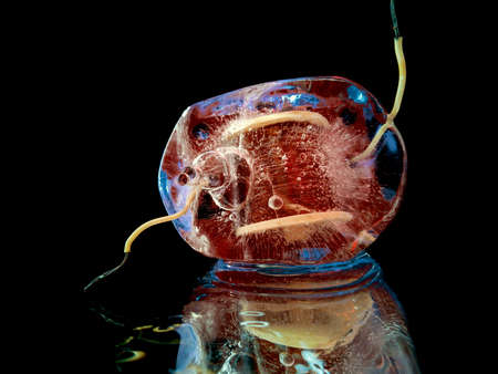 an electric coil frozen in ice as a symbol of a technological explosion in creative macro photography