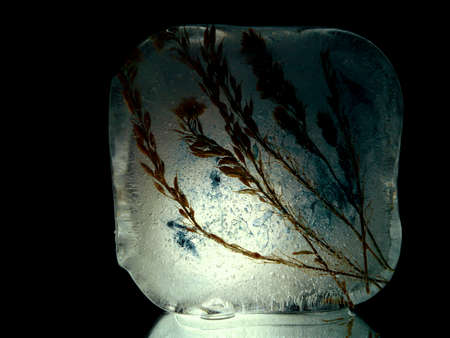tender spikelets frozen in cold ice, illuminated in the dark in creative macro photography Stock fotó