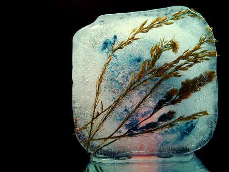 spikelets frozen in ice in creative macro photography Stock fotó