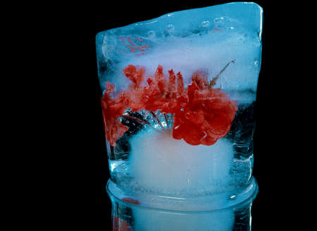 blue ice absorbed delicate red flower looks like a cocktail in creative macro photography