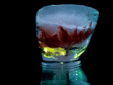 a flower with delicate red petals frozen in ice looks like an exotic cocktail