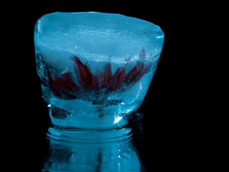 red flower in blue ice in abstract macro photography