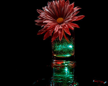 creative photography of variegated flower in glowing green liquid
