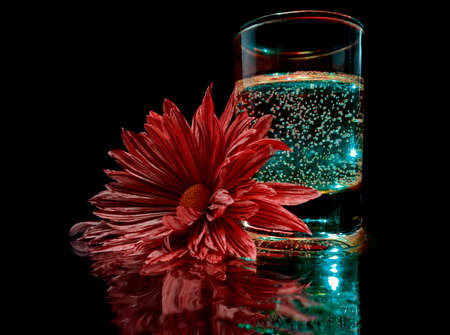 a red chrysanthemum lies next to a glass with a glowing drink in the dark Stock fotó