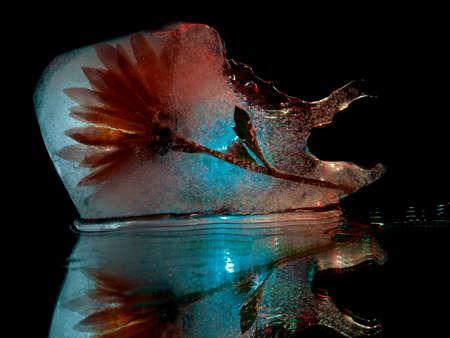 a flower frozen in an ice floe of a bizarre shape in the dark