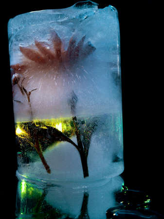 creative abstraction with a red flower frozen in ice in the dark