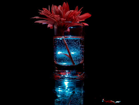 red flower in a glass with a glowing blue liquid in the dark