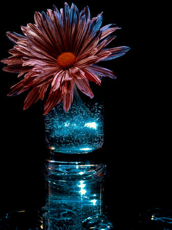 creative photography of a delicate flower in blue liquid with bubbles in the dark