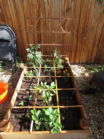 urban gardening: Garden box Stock Photo