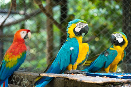 Three macaws perched in a small animal park. Colombia