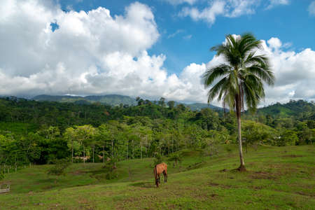 Country landscape with horse feeding in tropical climate .Colombia. 写真素材