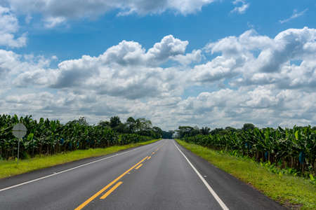 Two-lane asphalt road with banana plantations on both sides. Colombia. 写真素材