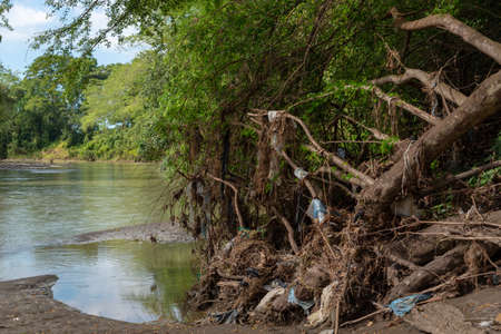 Roots with plastic trash from a fallen tree in a river in a tropical climate. Colombia.