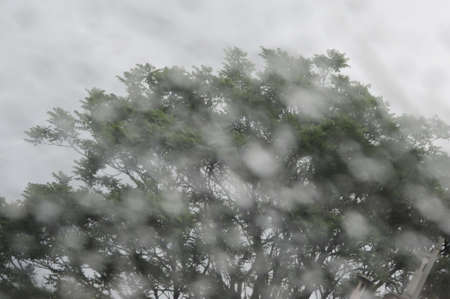 rain drops on a window with tree and cloudy sky in the background