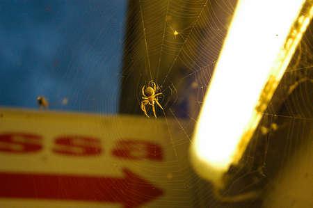 spiderweb in city at night
