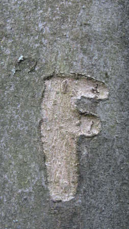 The letter 'F' carved on a tree