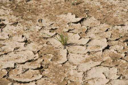 Dry soil, drought in summer