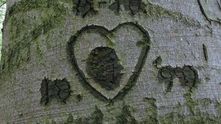 Heart symbol in tree bark