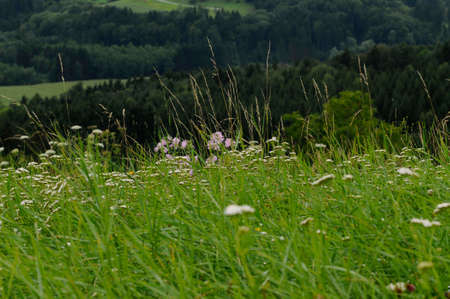 Grassland on a slope in summer 스톡 콘텐츠