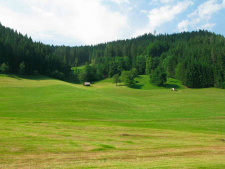 Grassland and forest in summer